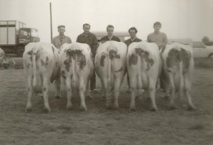 Hazelarenbosch behorend bij Scan0002 koeien